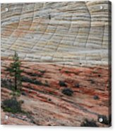 Checkerboard Mesa In Zion National Park Acrylic Print
