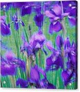 Close-up Of Purple Flowers Acrylic Print