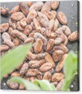 Cocoa Beans Acrylic Print