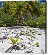Coconut Palms On A Polynesian Beach Acrylic Print