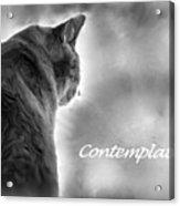 Contemplation Monochrome Acrylic Print