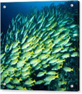 Coral Reef Scene Acrylic Print