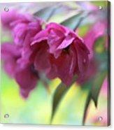 Crabapple Blossom Acrylic Print