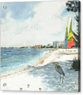 Blue Heron And Hobie Cats, Crescent Beach, Siesta Key Acrylic Print
