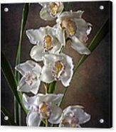 Cymbidium Cluster Acrylic Print