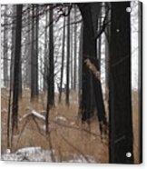 2 Deers Acrylic Print