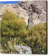 Desert Landscape Acrylic Print