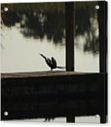 Dock Bird  Acrylic Print