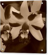 Double Orchid Acrylic Print