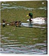 2 Ducks Acrylic Print