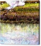Egret 1 Acrylic Print by Peter R Davidson