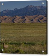 Eight Point Buck In The Grass Lands Of The Great Sand Dunes Acrylic Print