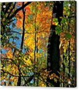 Fall Fire Works Acrylic Print