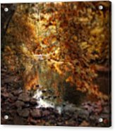 Fall Reflected Acrylic Print