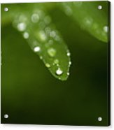 Fern Close-up Of Water Droplets  Acrylic Print