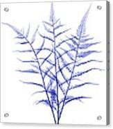 Fern, X-ray Acrylic Print