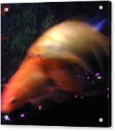 Fire Comet In Aquarium Acrylic Print