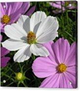 Flowers Acrylic Print