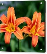 2 Flowers In Side By Side Acrylic Print