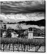 Fog Over The Vineyard Acrylic Print