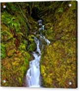 Streaming In The Olympic Rainforest Acrylic Print