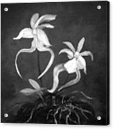 Ghost Orchids Acrylic Print