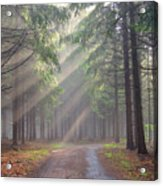 God Beams - Coniferous Forest In Fog Acrylic Print
