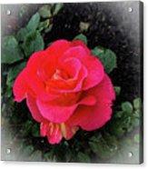 Gorgeous George Acrylic Print
