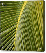 Green Palm Leaf Acrylic Print