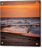 2 Herons On The Beach Acrylic Print