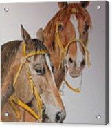 2 Horses Acrylic Print