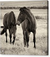 Horses Of The Fall  Bw Acrylic Print