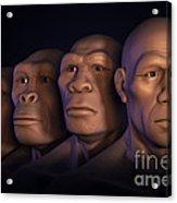 Human Evolution Acrylic Print