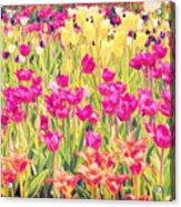 Impressionist Floral Xvi Acrylic Print