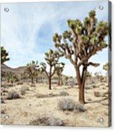 Joshua Tree National Park, California Acrylic Print