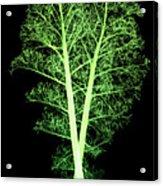 Kale, Brassica Oleracea, X-ray Acrylic Print