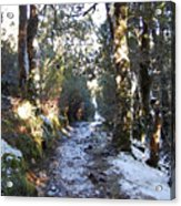 King Billy Forest Cradle Mountain Acrylic Print
