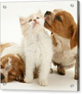 Kitten And Puppies Acrylic Print by Jane Burton