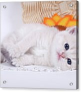 Kitten With Flover Acrylic Print