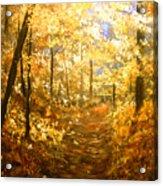 Lanterns Of Gold Acrylic Print