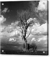 Lone Tree Acrylic Print