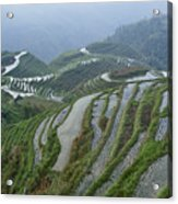 Longsheng Rice Terraces Acrylic Print