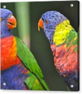 2 Lories In Discussion Acrylic Print