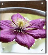 Clematis Flower On Water Acrylic Print