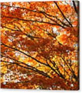 Maple Tree Foliage Acrylic Print