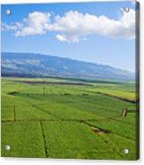 Maui Sugar Cane Acrylic Print