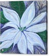 Midnight Poinsettia Acrylic Print