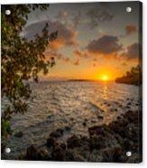 Morning At The Mangroves Acrylic Print