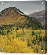 Mount Timpanogos Fall Colors Acrylic Print