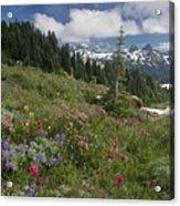 Mountain Meadow Acrylic Print by Bob Gibbons